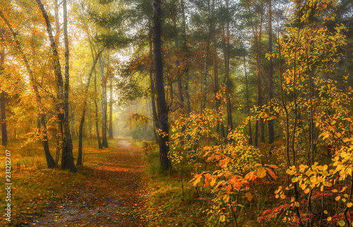 Foto op Plexiglas Bos sun rays play in the branches of trees. autumn forest. autumn colors. morning.