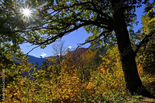 Foto op Plexiglas Landschappen Oktober, Laub im Herbst mit Sonnenstrahlen