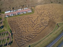 Aerial View Of A Corn Maze In ...
