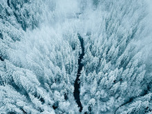 Above View Of Snow Covered Trees
