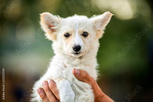 mongrel white puppy Fototapete