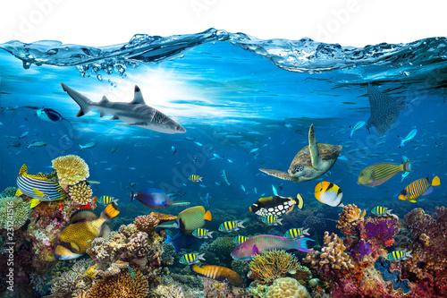 Staande foto Koraalriffen underwater paradise background coral reef wildlife nature collage with shark manta ray sea turtle colorful fish with wave in front isolated on white background