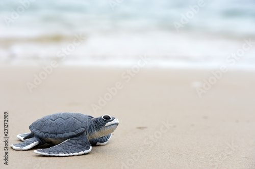 Poster Schildpad turtle baby On the beach Copy space