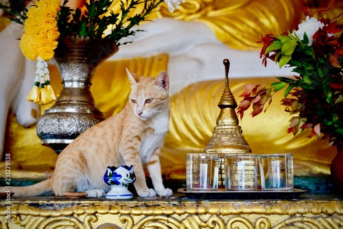 Foto op Aluminium Imagination Cat in Pagoda, Mawlamyine, Myanmar January 2018