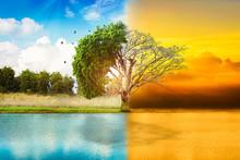 Environmental Concepts, Live A...