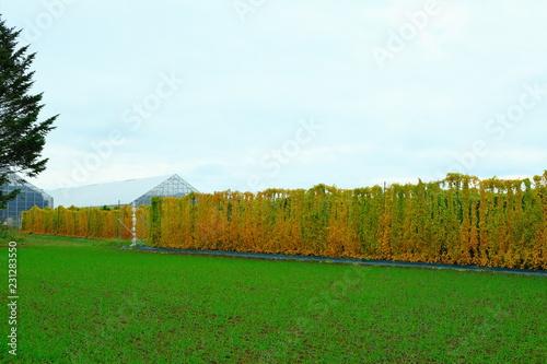Deurstickers Groene Japanese agriculture in autumn