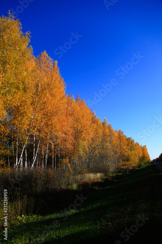 Foto op Plexiglas Donkerblauw Golden autumn in central Russia. Picturesque trees lit by sunshine - sunny landscape in bright sunlight. Scene with colorful trees in sunny evening