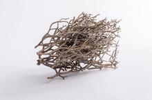 Bundle Of Dry Twigs
