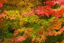 色着いた秋の木々と山...