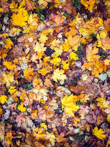 colorful autumn leaves Wall mural