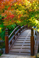 FototapetaBeautiful japanese garden with bridge in autumn time