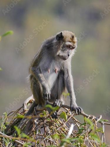 Foto op Plexiglas Aap Monkey with face bent slightly looking down