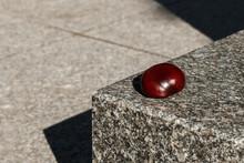 Brown Chestnut Lies On Granite...