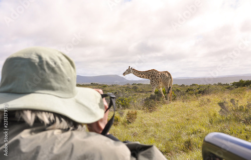 Woman taking pictures of a giraffe at a safari tour in South Africa during a warm sunrise.