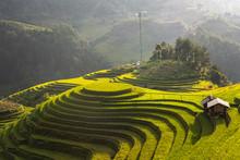 Landscape Rice Fields On Terra...