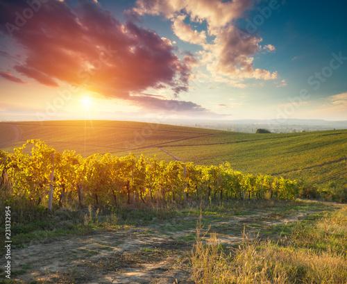 Deurstickers Oranje eclat Tuscan vineyardsThe sunset on the vineyards of the Bolgheri wine.
