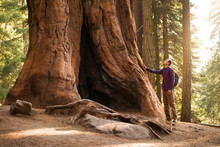 Hiker Man In Sequoia National ...