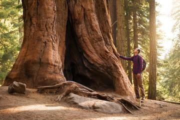 Planinar u Nacionalnom parku Sequoia. Mužjak putnik koji gleda u divovsko stablo sekvoje, Kalifornija, SAD
