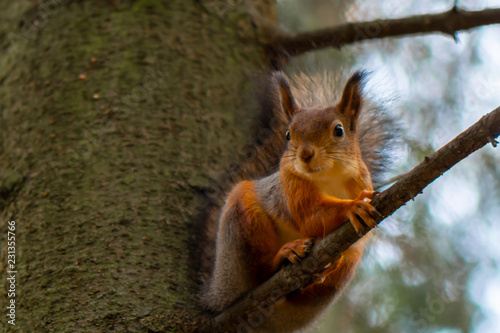 Keuken foto achterwand Eekhoorn Squirrel sitting on a branch