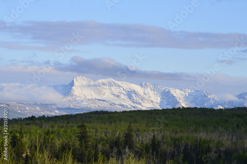 Snow covered Rocky mountain view with a lovely green forest below #231356920