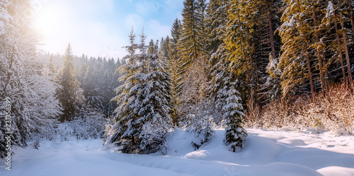 Keuken foto achterwand Bomen winter landscape in the forest. Pine Trees covered by fresh snow under Sunlight. in Austria Alps. Wonderful Alpine Highlands in Sunny Day