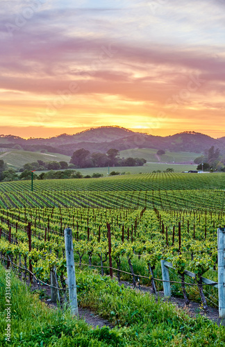 Spoed Fotobehang Centraal-Amerika Landen Vineyards at sunset in California, USA