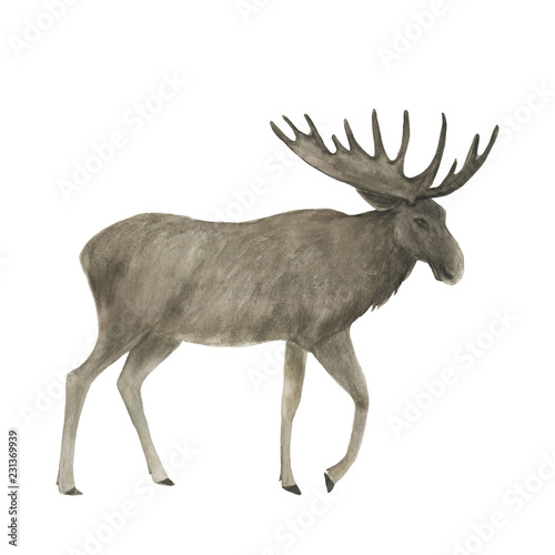 Fotobehang Hert Watercolor painting a brown moose isolated on white
