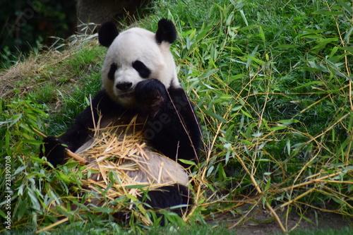 Stickers pour porte Panda Oso panda