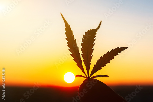 Leaf of marijuana against the sunset sky with sun rays Wallpaper Mural