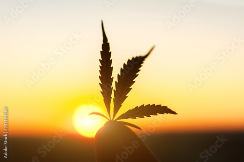 Leaf of marijuana against the sunset sky with sun rays Canvas Print