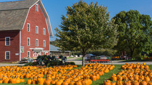 Rural Farm With Holiday Pumpki...