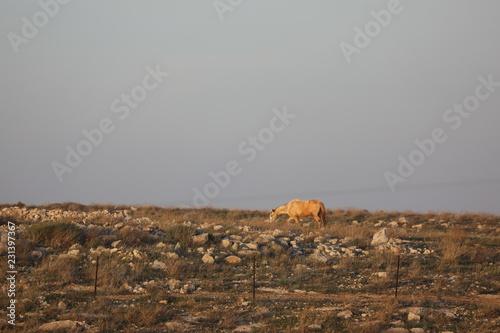 Deurstickers Bleke violet horse mounts landscape