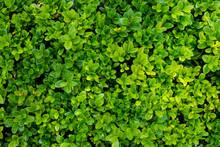 Mocno Zielony