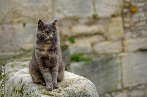 Fotografie, Obraz  Chat tacheté gris et roux assis dans la rue.