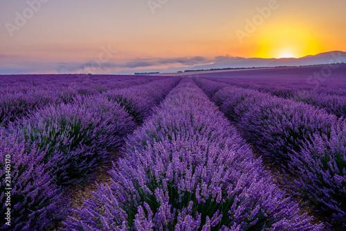 Photo Stands Lavender Champ de lavande en Provence, France. Plateau de Valensole. Lever de soleil.