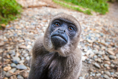 Staande foto Aap Amazon. A monkey. Ecuador. Animals of Ecuador. Wild monkey in the forests of the Amazon.