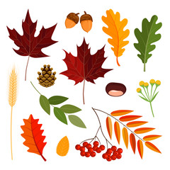 Autumn vector leaves set for your invitation, greeting card, mid season sale banner. Isolated vector elements on white background