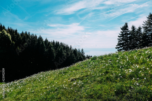 Fotobehang Zwart landscape with trees and blue sky