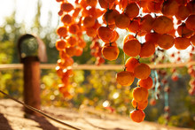 Persimmons Hanging And Drying To Make Dried Persimmons. Dried Persimmon. Traditional Japanese Food