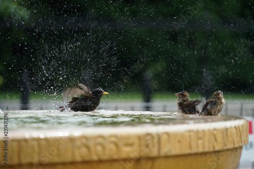 Garden Poster Hyena 水浴びをする鳥