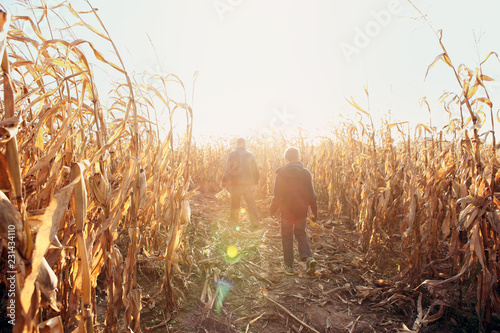 Valokuvatapetti Father and son walking in dried corn stalks in a corn maze