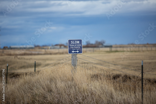 Sheep and gaurd dog crossing sign, in the country. Poster Mural XXL