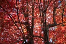 Colorful Small Town Autumn Lea...