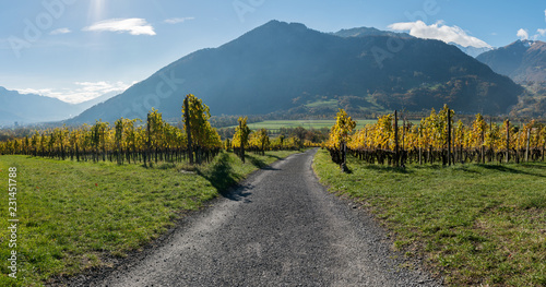 Staande foto Blauwe jeans golden vineyards and grapevines in the mountain landscape of the Maienfeld region in Switzerland with a gravel road