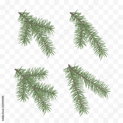 Fototapeta Set of realistic fir branches. Christmas tree or pine. Conifer branch symbol of Christmas and New Year isolated on transparent background. Vector illustration obraz