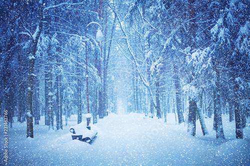 Fototapeta Beautiful view of Snow-covered Winter park during snowfall. obraz na płótnie