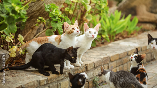 Canvas Print Group of stray cats sitting on pathway curb, looking up as someone is about to throw them some food