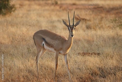 Foto op Canvas Antilope What animals are kept in the zoo and not only. Wildlife zoos wild forest.