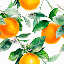 Orange Seamless Pattern. Orange Fruit Hand Draw Watercolor Illustration.