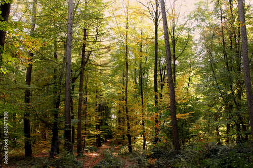 Poster Forest Herbstwald